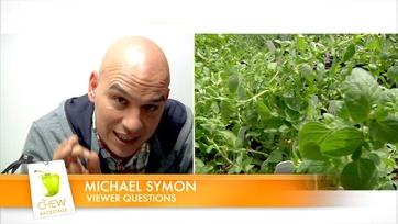 Michael\'s Tip - Fresh vs. Dried Herbs