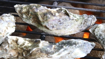 How to Grill Oysters!
