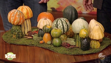 Carla\'s Pumpkin Patch on The Chew: Part 2