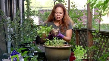 On Location: Gardening w/ Patti Moreno