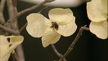 Paper Flower: Dogwood