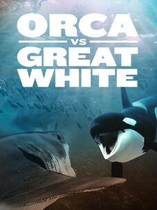 Orca vs. Great White