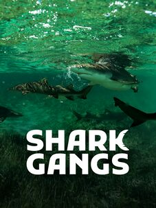 Shark Gangs