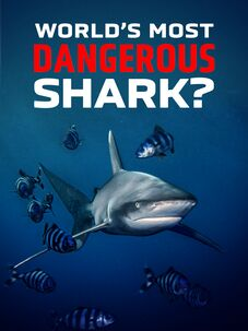 World's Most Dangerous Shark?