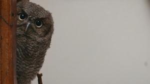 You're Owl I Need