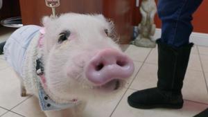 Oui, Oui… Piggie!
