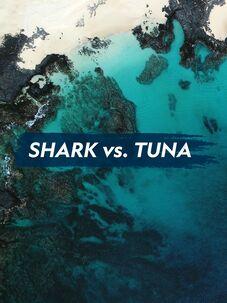 Shark vs. Tuna